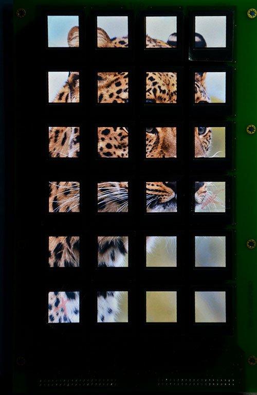 Displaytasten über Ethernet, auf den Displaysten ist ein Tierbild zu sehen